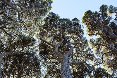 Jardin botanique de la villa thuret antibes cpie les for Jardin villa thuret antibes